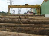 Perusahaan kayu 28