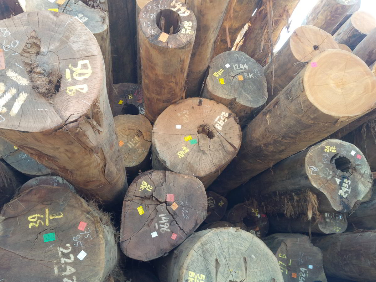 kayu pilihan