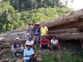 pemilihan kayu hutan