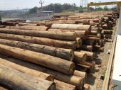 raw wood material grand indo timber